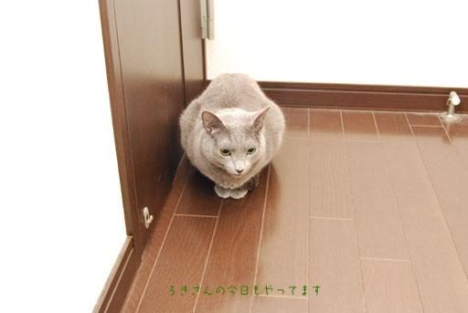 suzu100424-1.jpg
