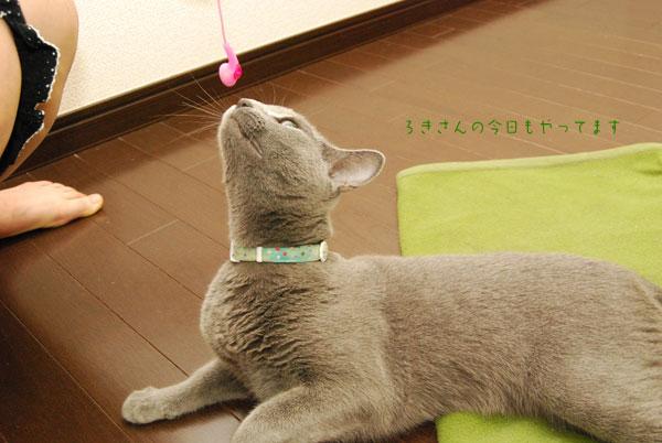 suzu100831-3.jpg