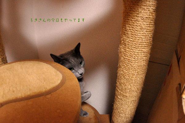 suzu120229-1.jpg