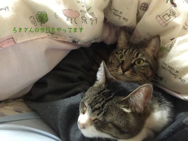 suzu160328-3.jpg