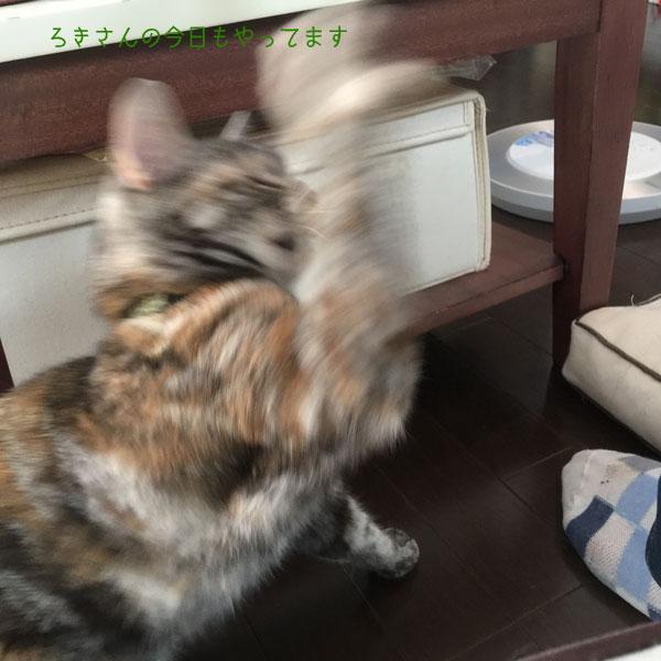 suzu160717-4.jpg